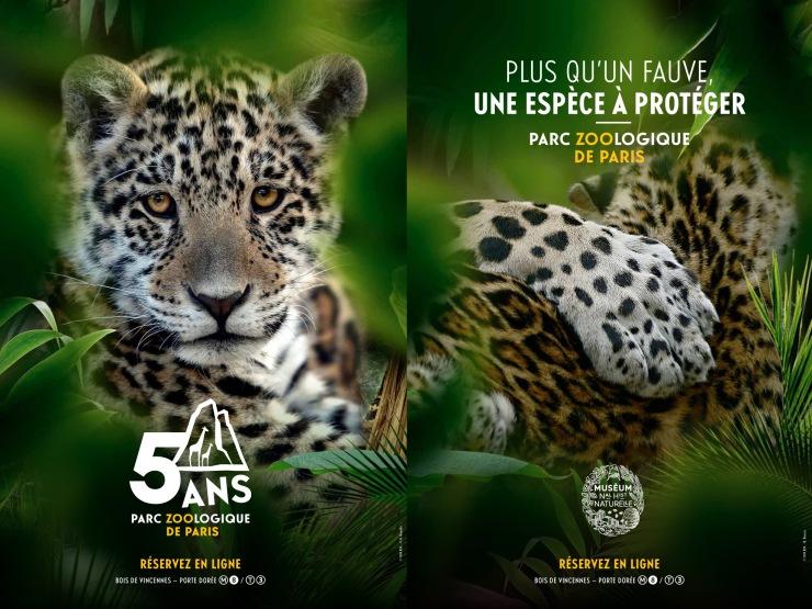 pzp_jaguar5ans2019_200x150_ok_bd (1)