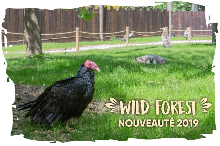 wildforest-voliere-vautours-01_0