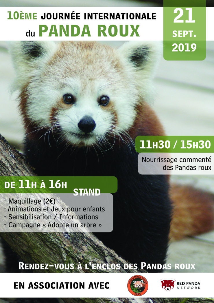 panda roux affiche_Plan de travail 1